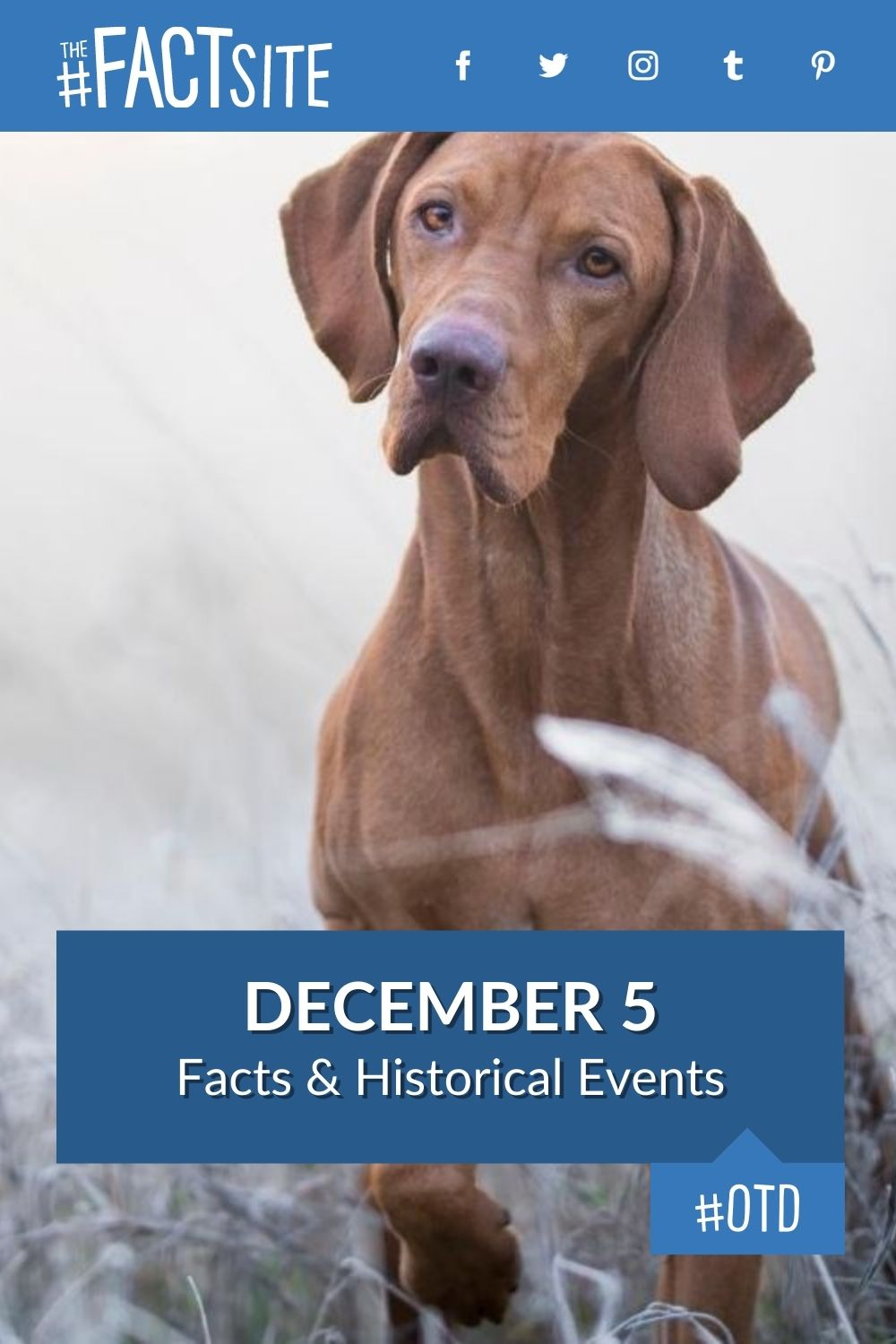 Facts & Historic Events That Happened on December 5