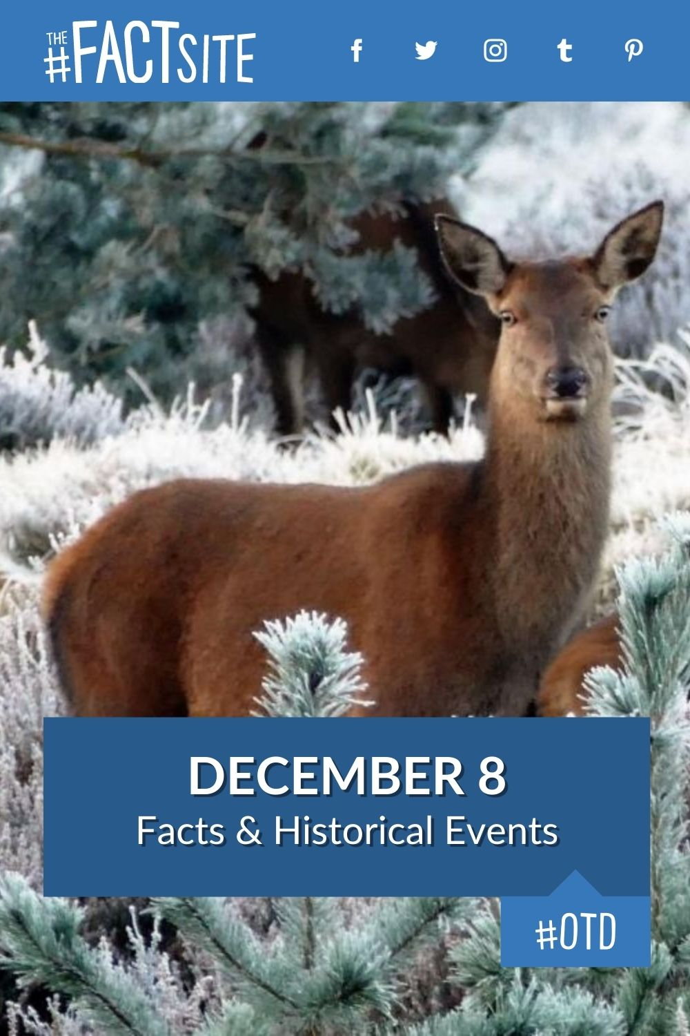 Facts & Historic Events That Happened on December 8
